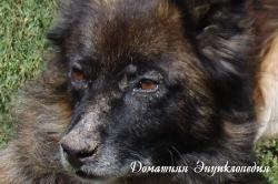 vzglyad-2012-10