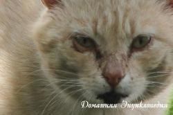 vzglyad-2012-4