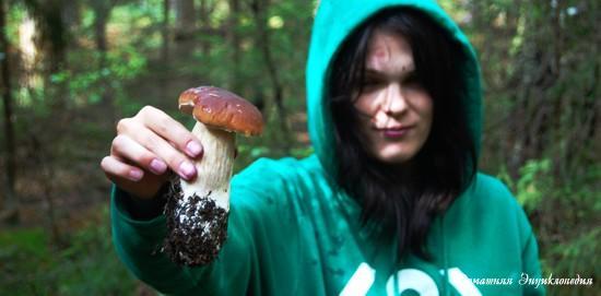 Энциклопедия природы. Статьи о природе. Белый гриб. Где и как его искать.