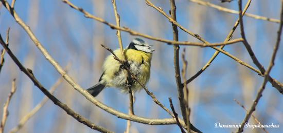 Энциклопедия природы. Как кормить птиц зимой? Чем кормить птиц зимой?