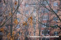 Энциклопедия природы. Ясень. Его семенами любят лакомится многие птицы.