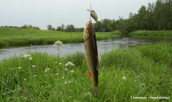 Изображение 1 : Пора ловить голавля.